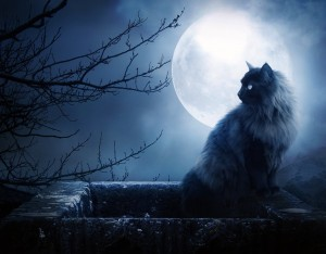 blue moon cat