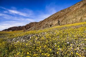 death valley desert gold